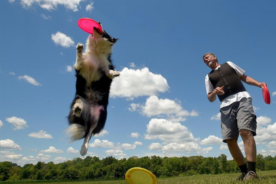 Owner playing frisbee with dog to keep him entertained