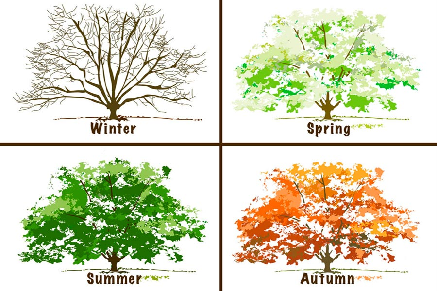 Seasons in Australia - Summer, Autumn, Winter and Spring
