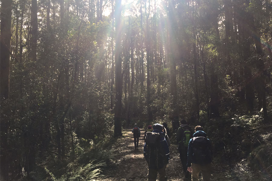 Hiking the Mount Macedon Walking Trail