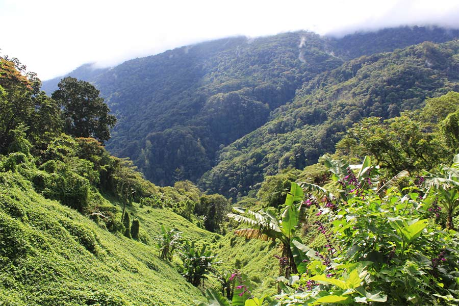 View of the Kokoda Track