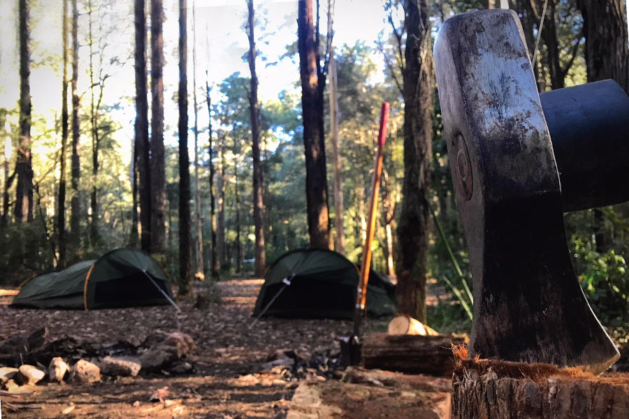 Casurina Campground in Olney State Forest