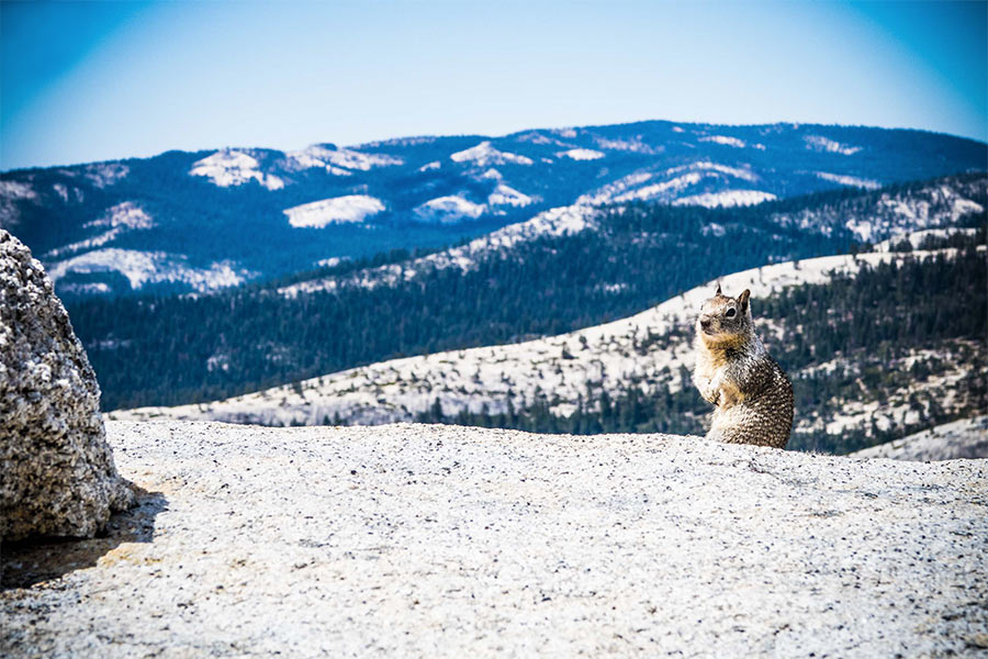 Squirrel on hill