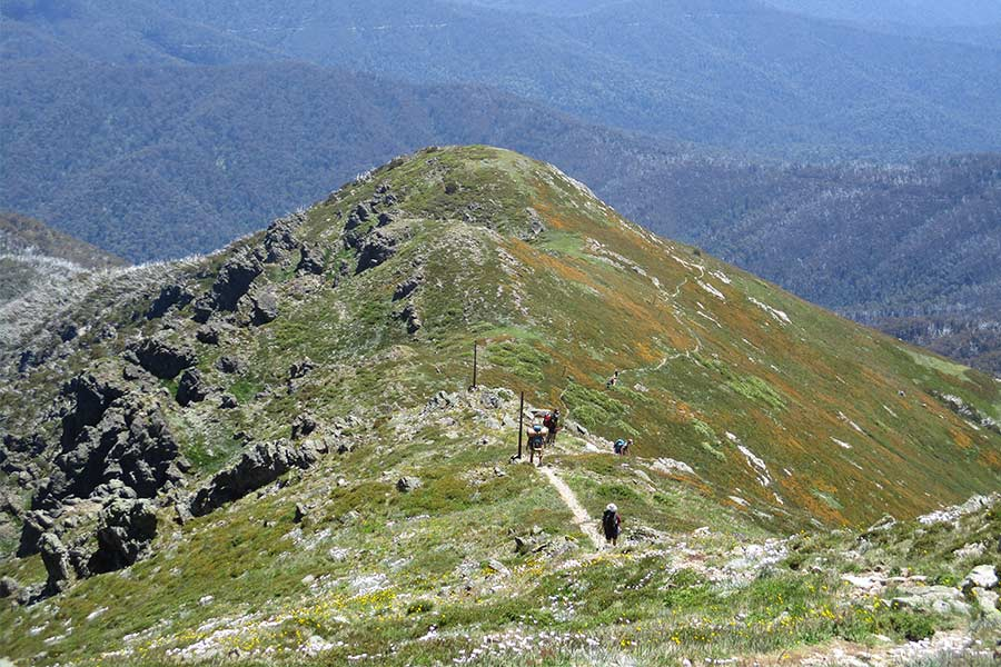 Descending-Bogong-via-Staircase-Spur---1,300m-of-knee-tingling-altitude