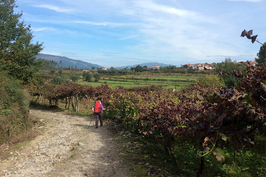 Walking along the Camino trail past vineyards