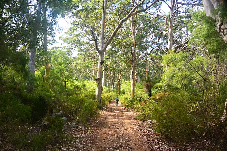 Wakling along a track in the Boranup-Karri-Forest