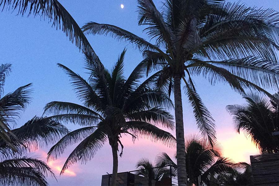 View of Palm Trees at sunset in Mexico