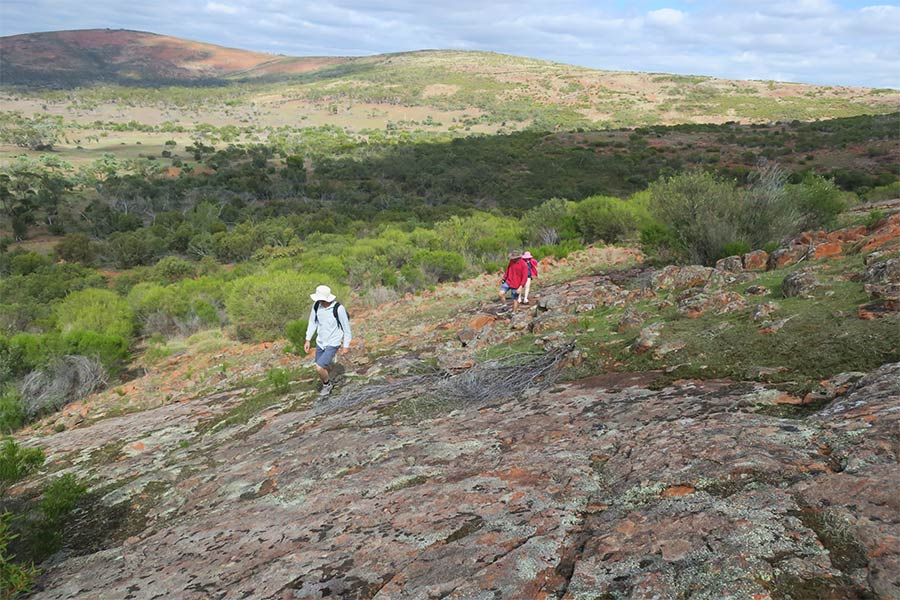People bushwalking to points and peaks of interest in the Gawler Ranges