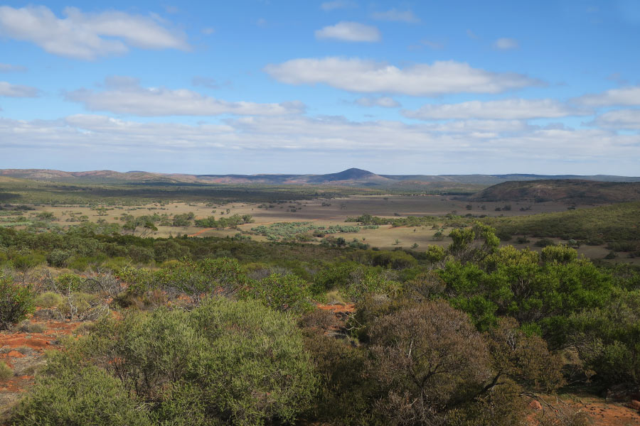 Parts of the Gawler Ranges have a definite African Plains look about them