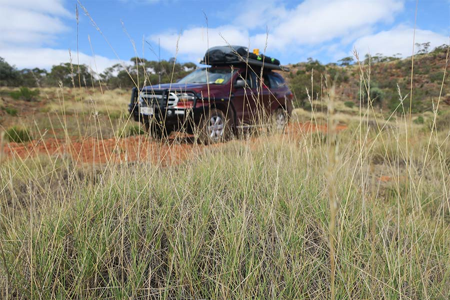 While known as a 4WD destination, the family Commodore or soft roader should have no problem in dry weather