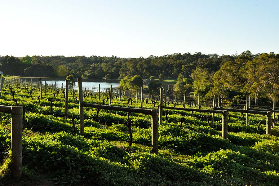 Amazing-wineries-in-the-region