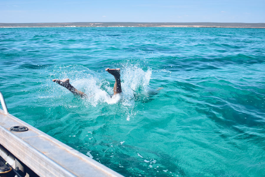 Man diving into the water at Gnaraloo Bay