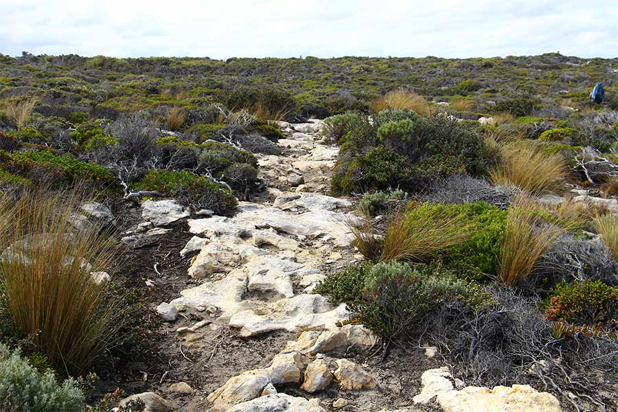 A typical part of the track in Kangaroo Island, South Australia