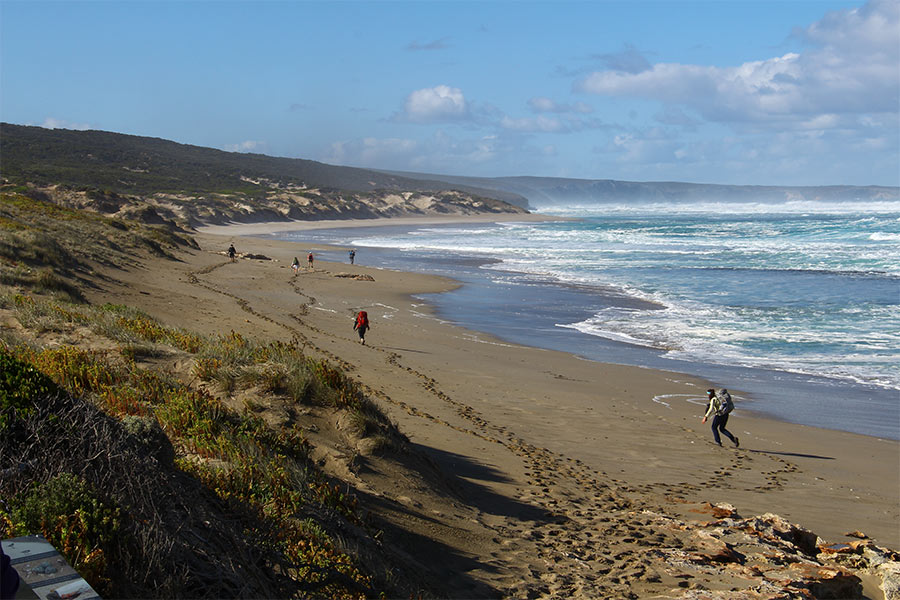 View of people walking along Maupertuis Beach in Kangaroo Island