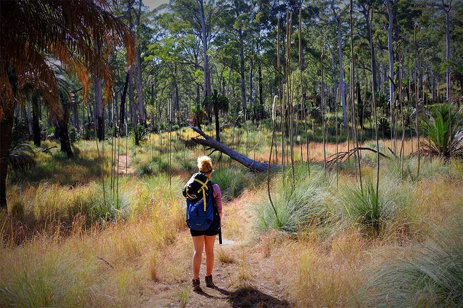 Woman walking along the Great Carnarvon Gorge walk