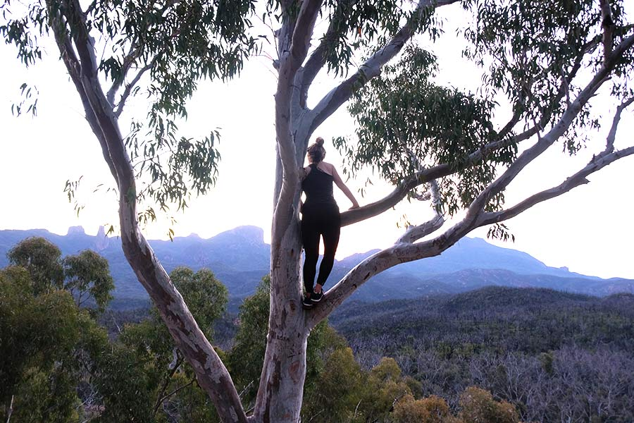 Woman viewing the Warrambungle NP from a tree branch