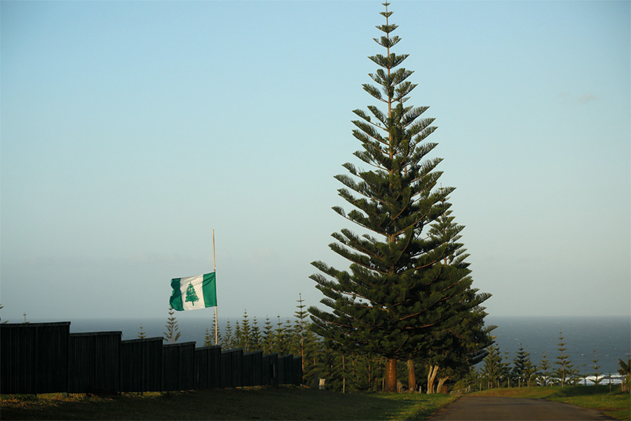 Norfolk Island flag waving in the wind next to a tall pine tree
