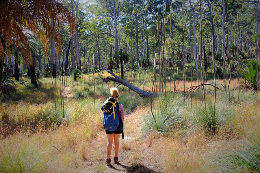 A woman hiking part of the Carnarvon Gorge Walk
