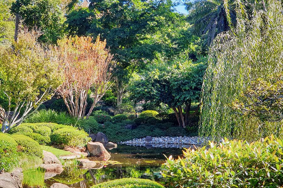 A sunny view of the water, plants and trees in the japanese gardens