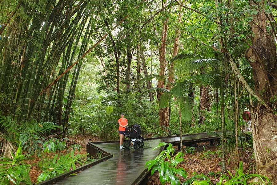 A lady stands next to a stroller on a boardwalk, surrounded by rainforest