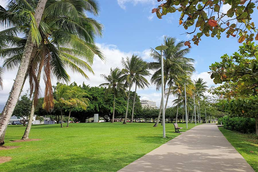 A concrete path, lined with palm trees, that runs along a large grassy area