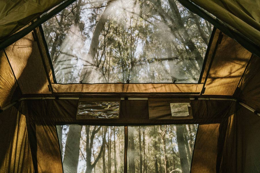 Looking through the tent skylight at the treetops above