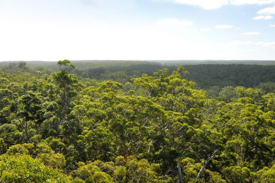 A spectacular view of forested mountains stretching out into the distance, from a treetop.