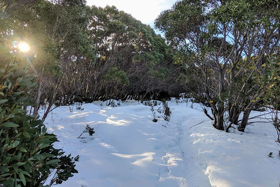 A low sun shines through trees on a snow covered ground.