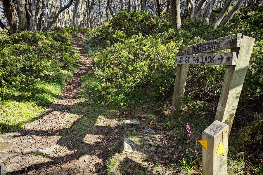 A wooden sign, next to a trail beneath the snow gums, points the way to Mt St. Phillack.