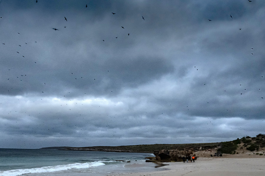 Hundreds of thousands of birds flying across the grey-cloud sky and coming in to land on an island.