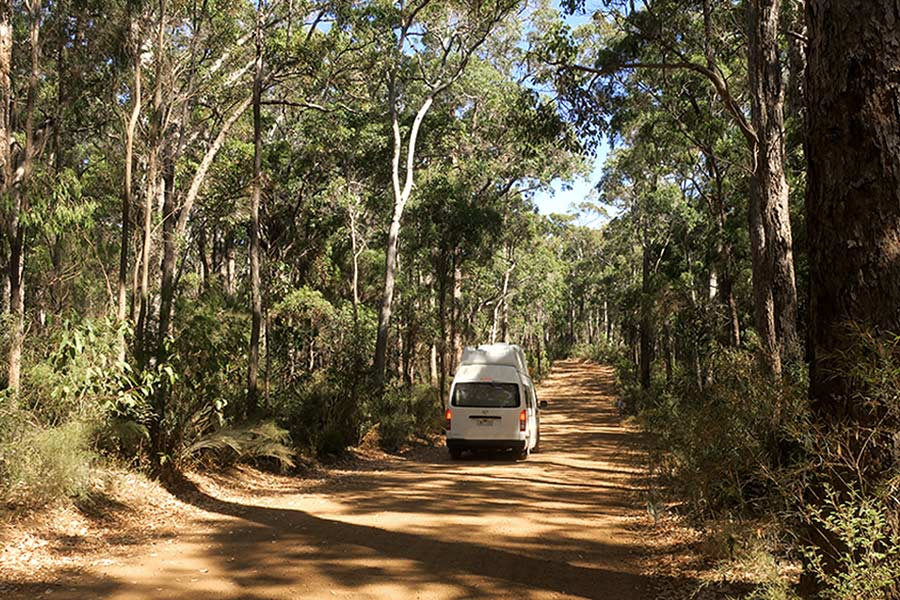 A white campervan driving along a well maintained forest track. There are tall trees either side.