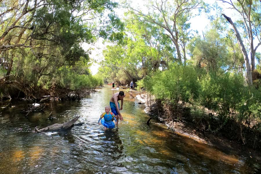 A toddler and adult wading through gentle creek water to cool off in summer. There are gum trees overhanging and dappled shade.