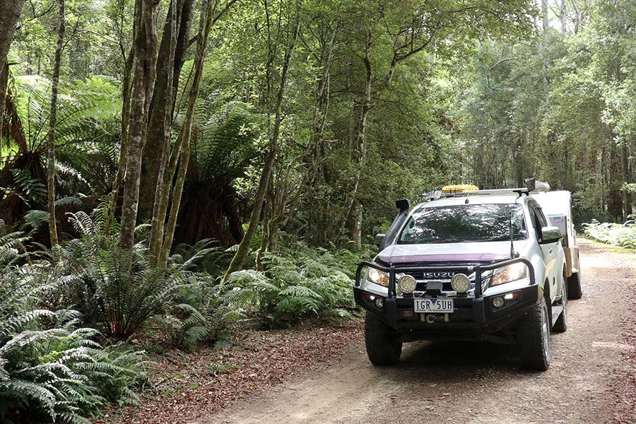 An Isuzu 4WD with camper towed behind is parked on a track surrounded by thick forest.