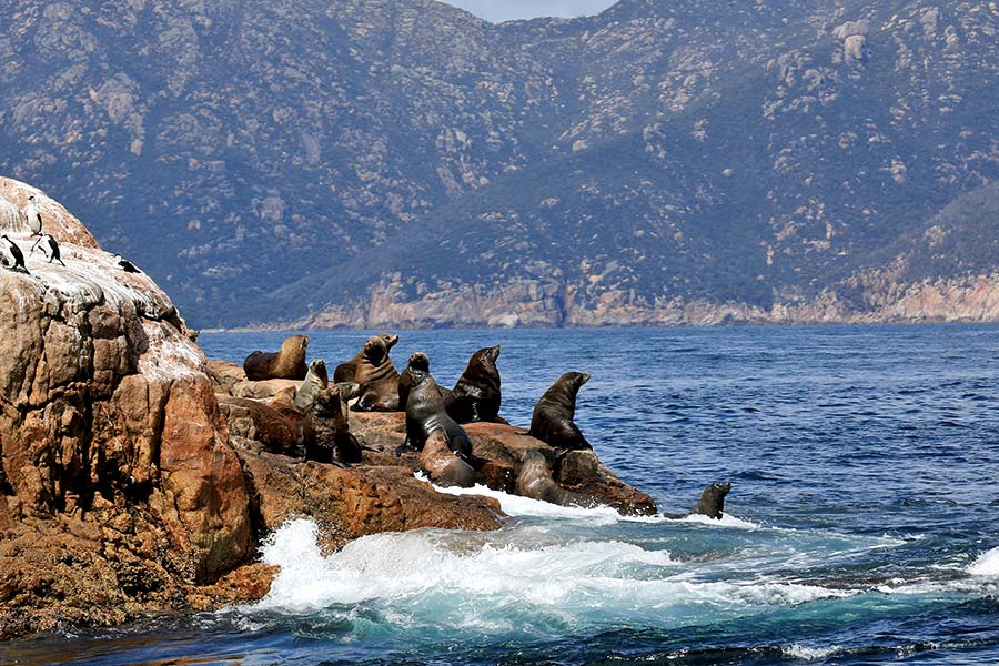 Mountains meet the ocean with a group of seals resting on rocks in the foreground.